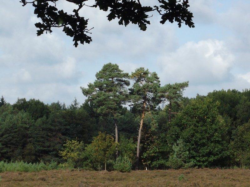 Omgeving Spijkertse Heide