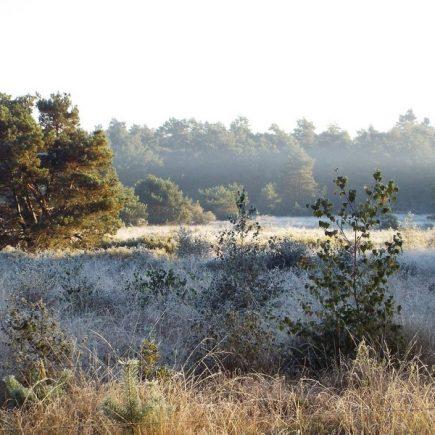 Wandelroute Spijkertse Heide-tocht, te Bergeijk