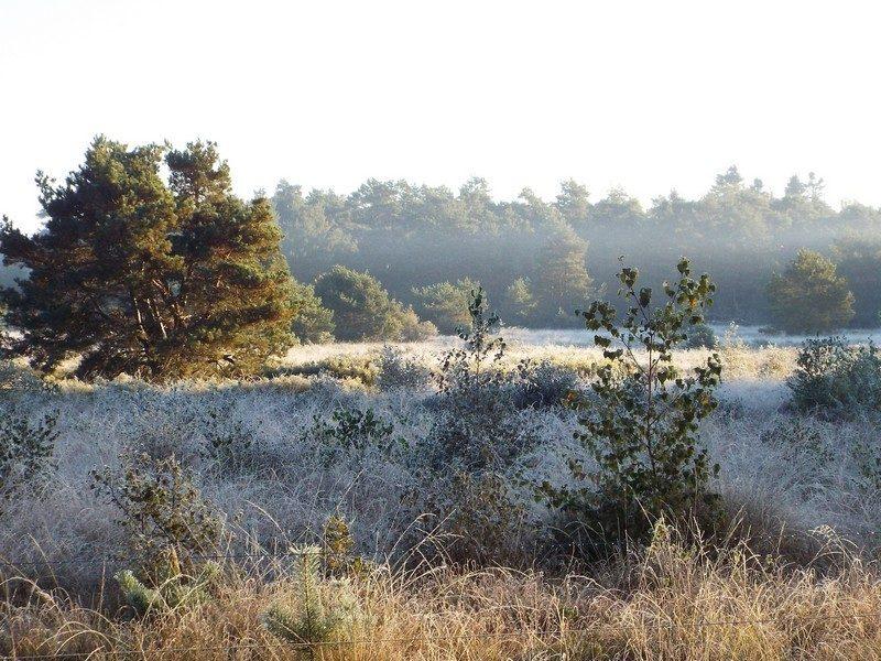 Hapertse Heide