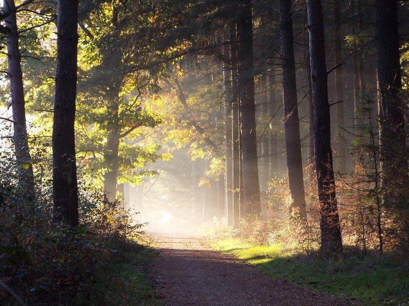Zonsopkomst in het bosgebied