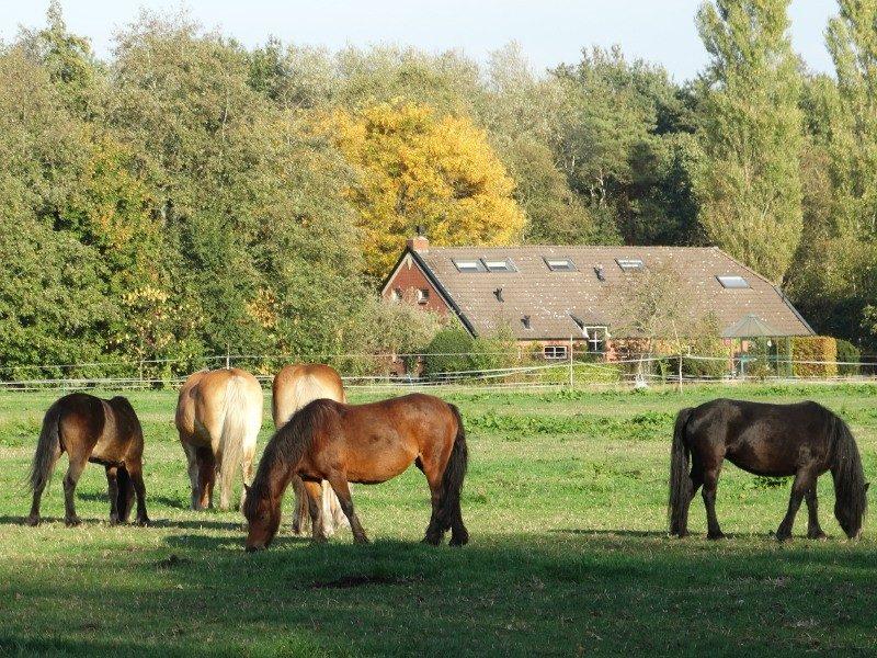 Een paardenweitje