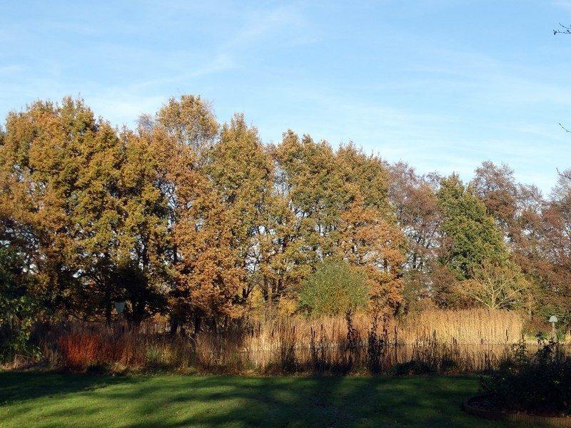 Herfstkleuren in Oud Veele