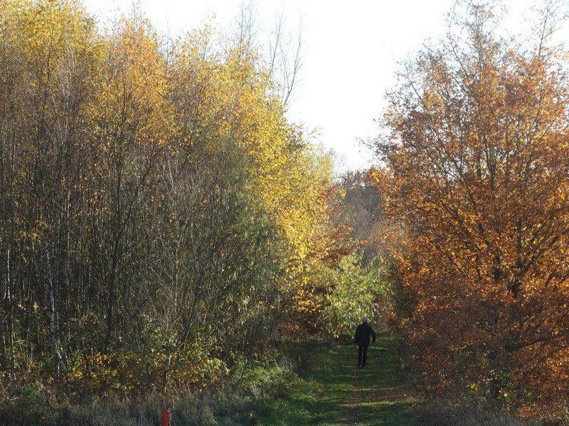 In het bos bij Ter Wupping