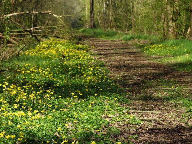Voorjaar op het Molenpad