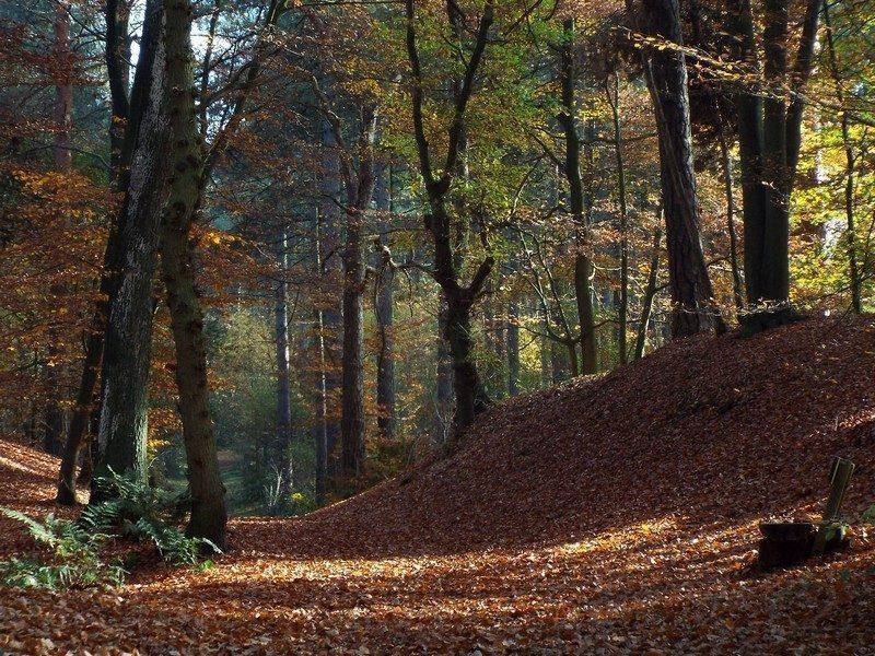 Leeremarksche Heide