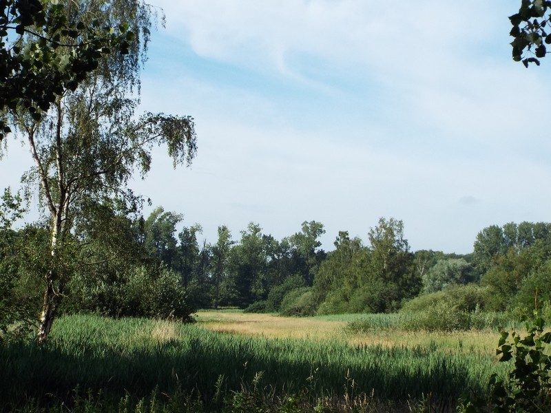 Landgoed Haanwijk, natte graslanden
