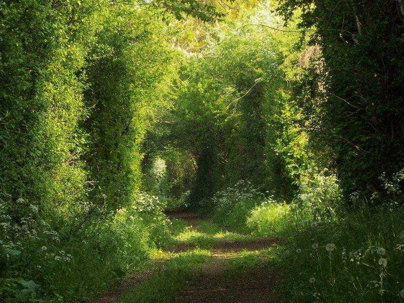 Ook een pad door de Maasheggen
