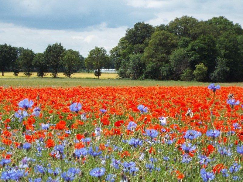 Kleurrijk veld