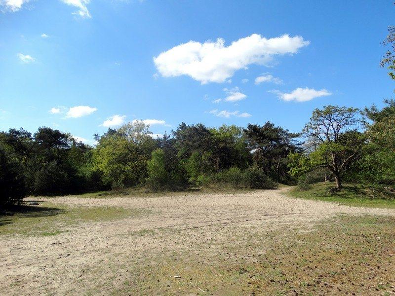Een zandvlakte in het bos