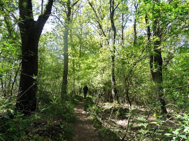 Wandelen over een wal in het bos