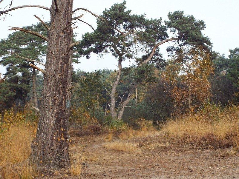 Herfst in het Leenderbos