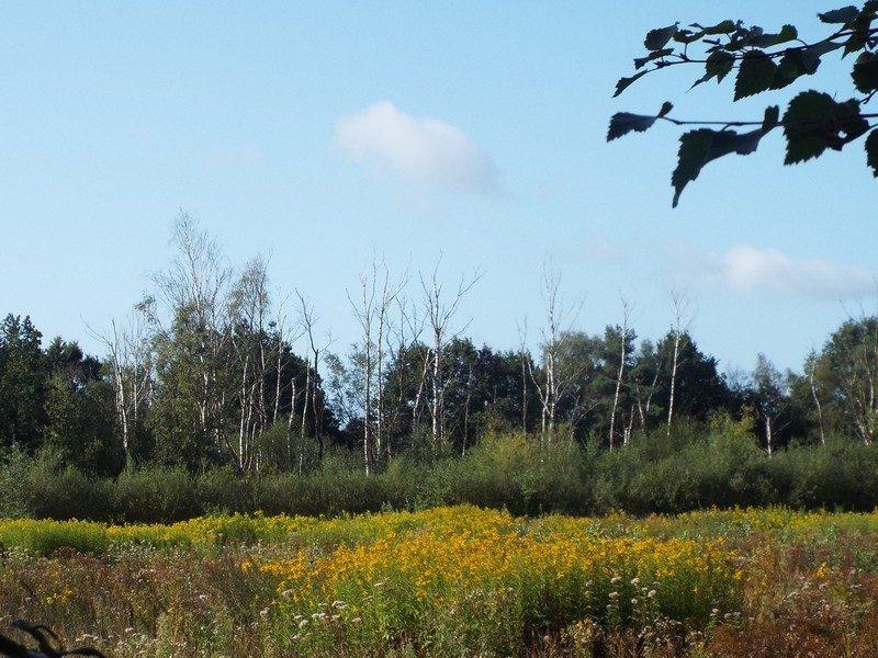 Beverbeekse Heide