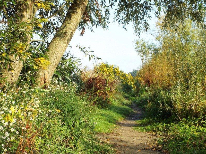 Smal pad in omgeving Broekhuizerweerd