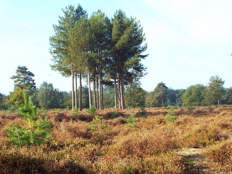 Swolgender Heide