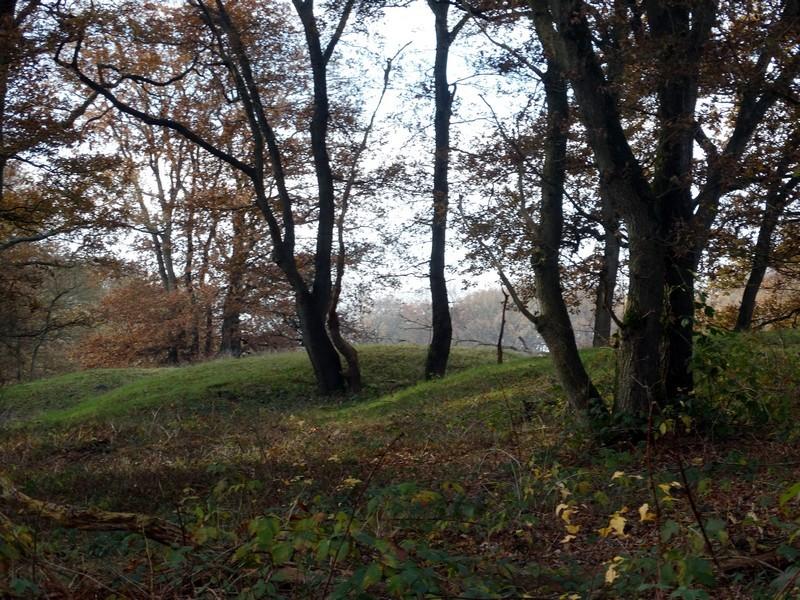 Grafheuvels in de Strubben.