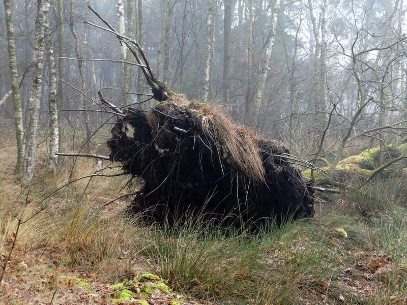 En een prehistorische koe?