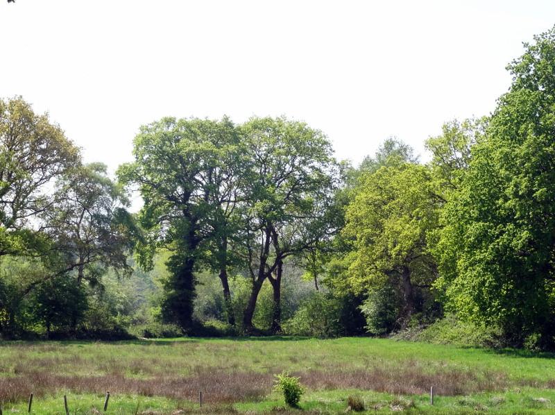 Een van de vele bosweides langs het diepje