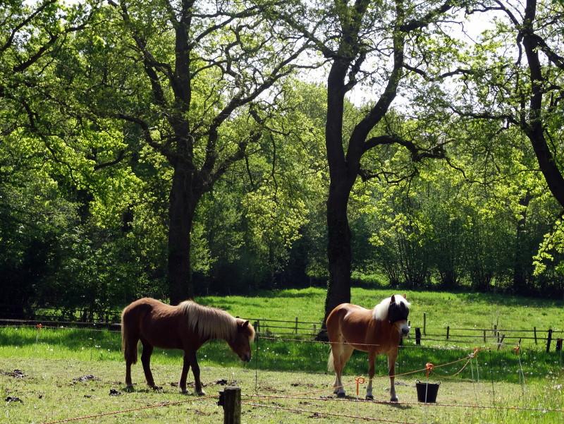 En een paardenweitje