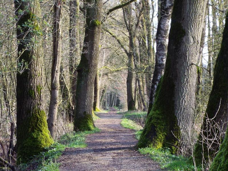 Pad langs begrazingsgebied van edelherten