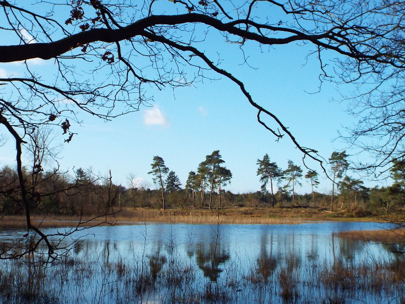 Waterplas in Weerterbos