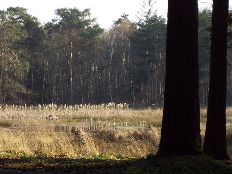 Ven in de Papenvoortse Heide