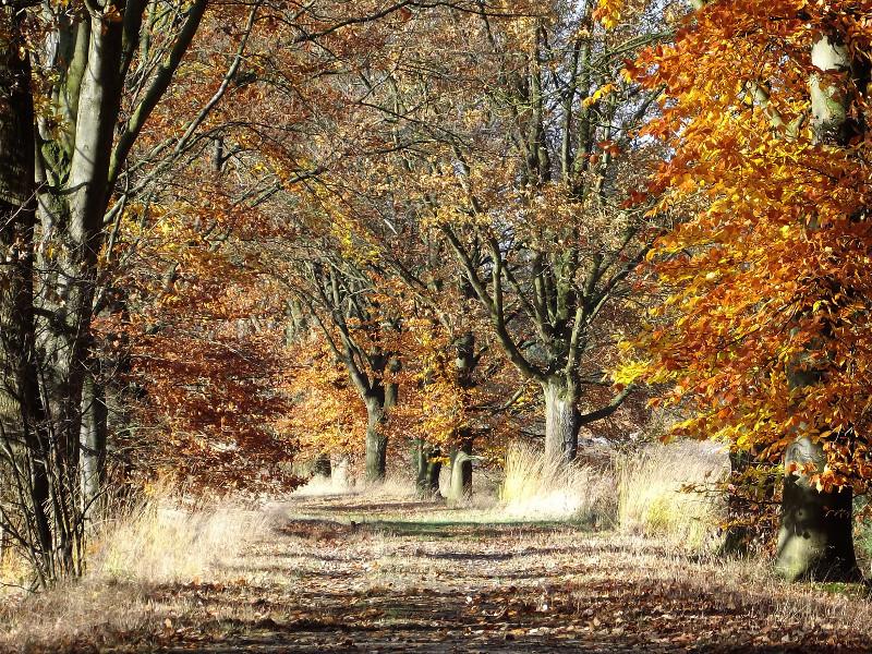 Een pad in herfstkleuren