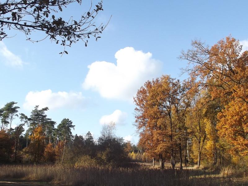 Weerterbos in herfstkleuren