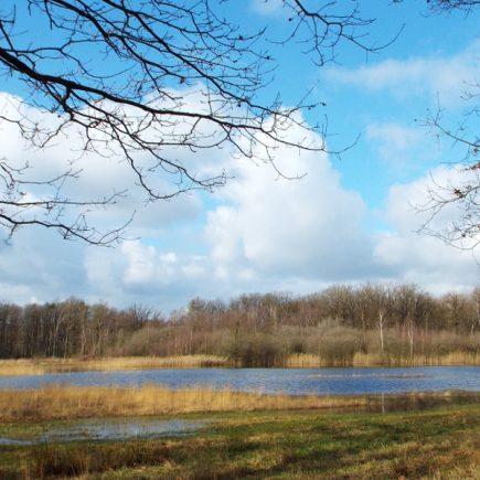 Wandelroute Weerterbos-tocht, te Nederweert
