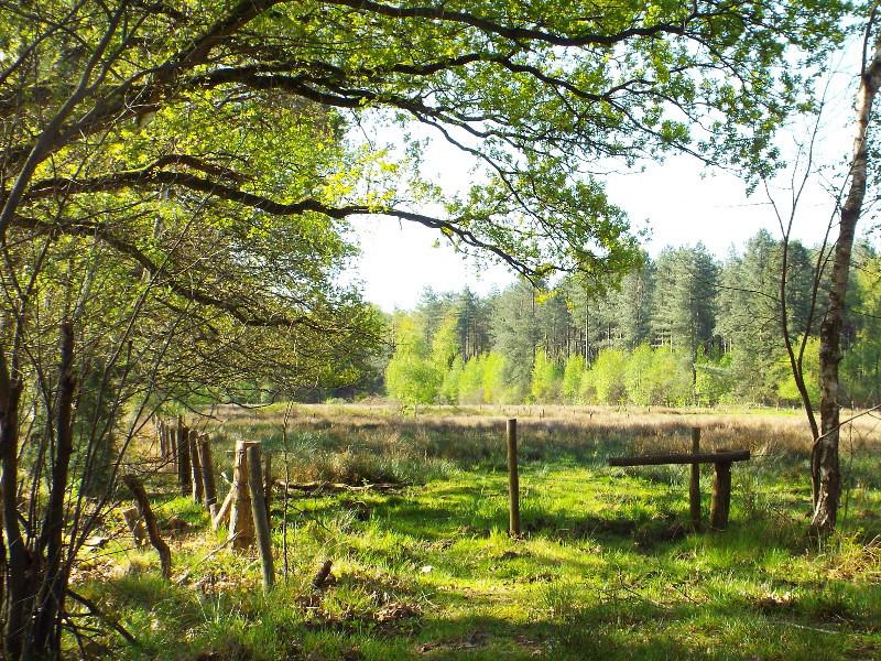 Nat grasland