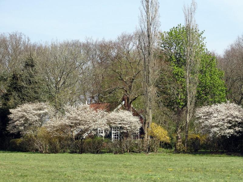 Verscholen achter voorjaarsbloei