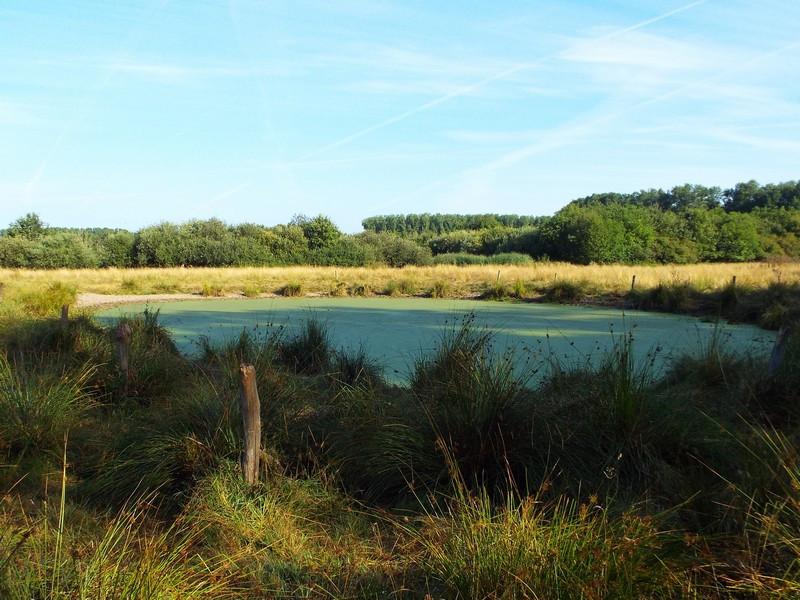 Grasland met waterplas in het Hezelaarsbroek