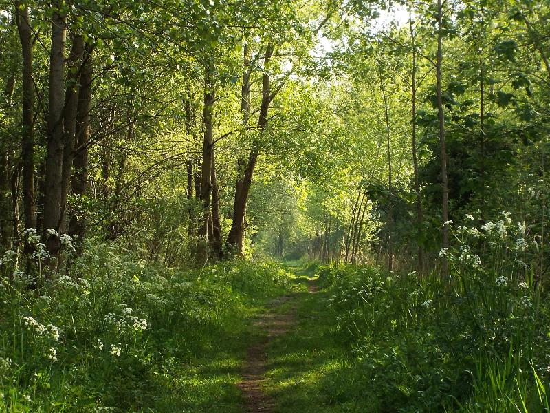 Bosgebied de Heerendonk