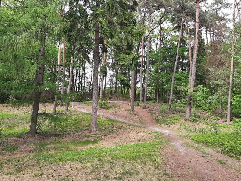 Het Hunzebos