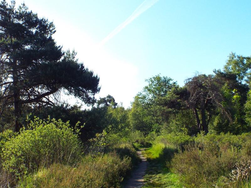 Pad door het natuurgebied Oisterwijkse Bossen en Vennen