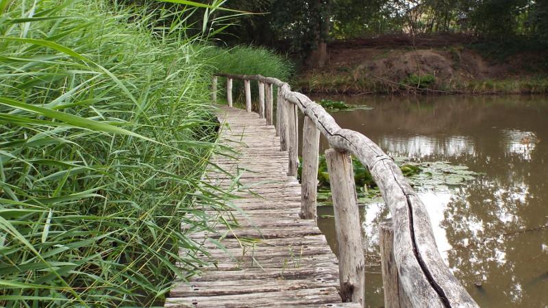 Knuppelbrugje bij natuurtuin 't Bundertje