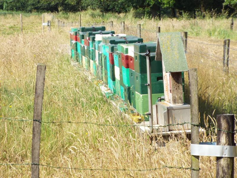 Het Heijkersbroek, bijenkasten