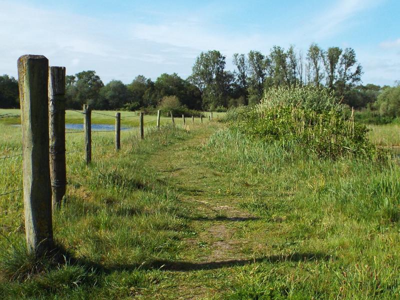 De Krang, pad door begrazingsgebied