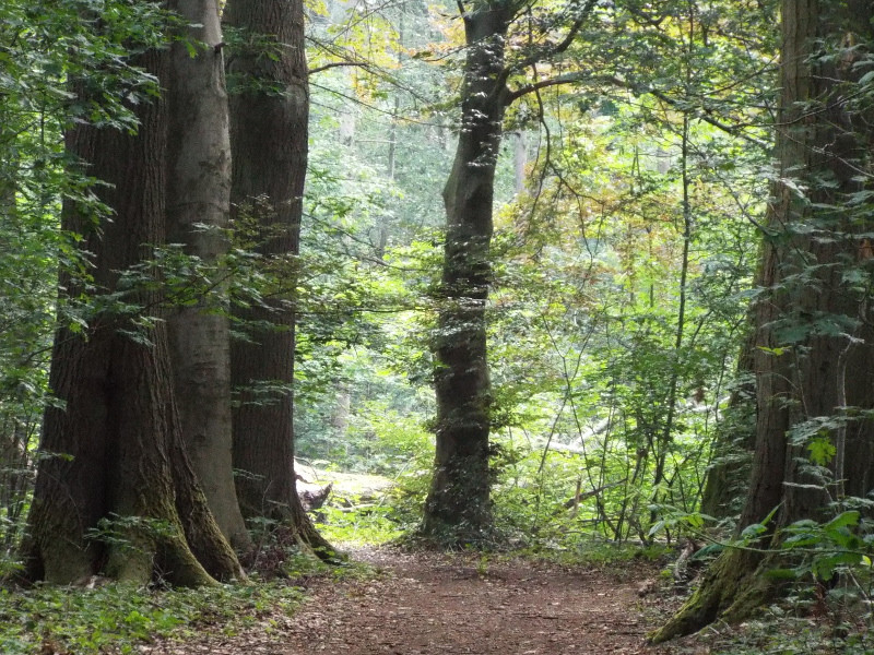 Pad door landgoed Beijlshof