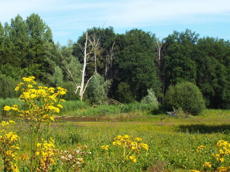 Nat grasland in het Heijkersbroek