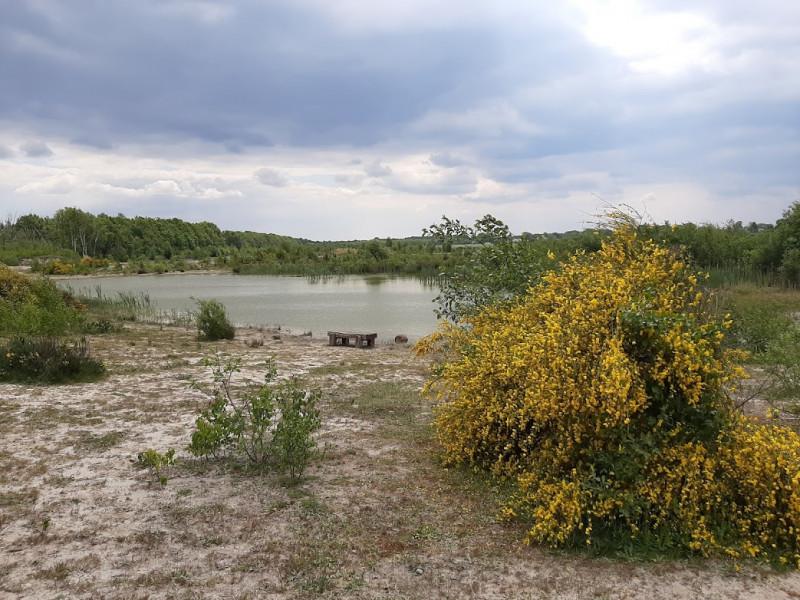 Waterrijk gebied in het Oosterbos