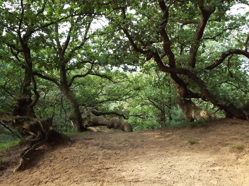 Bomen op heuvelrug