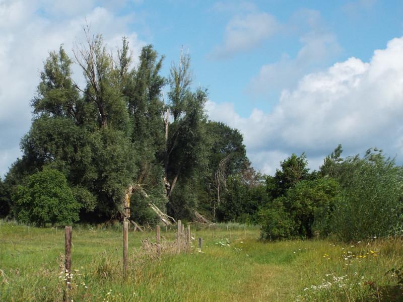 Grasland in uiterwaarde van de Maas