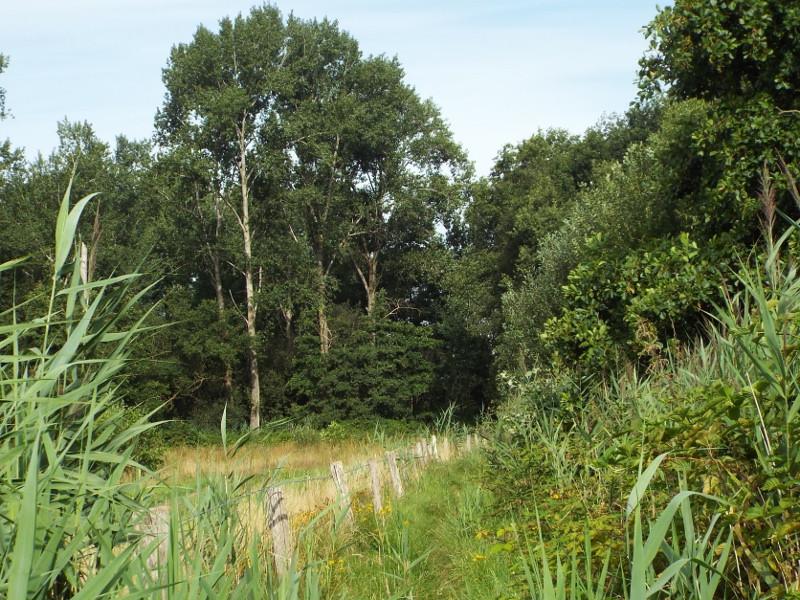 Pad aan rand van grasland