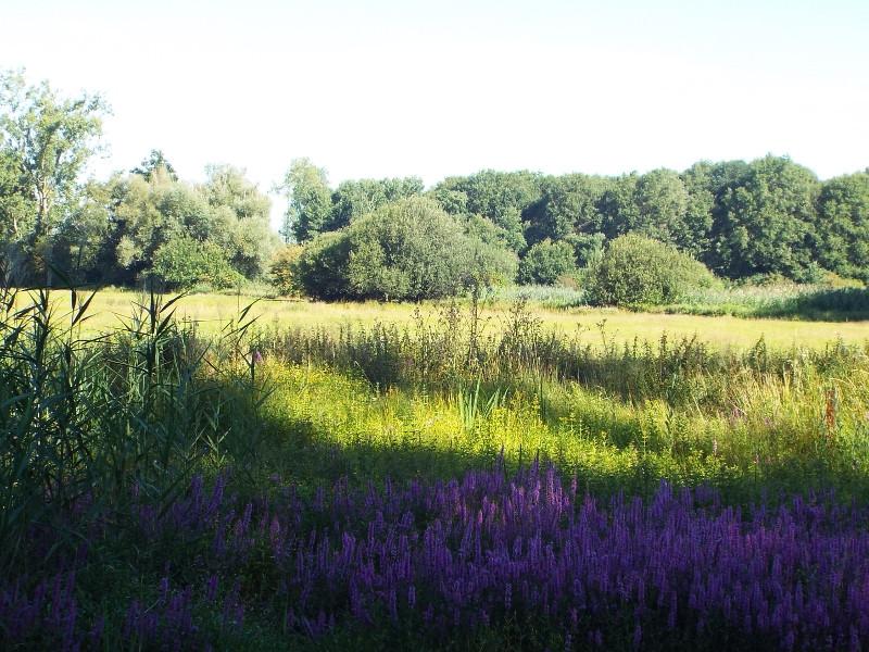 Bloemrijke poel in het grasland