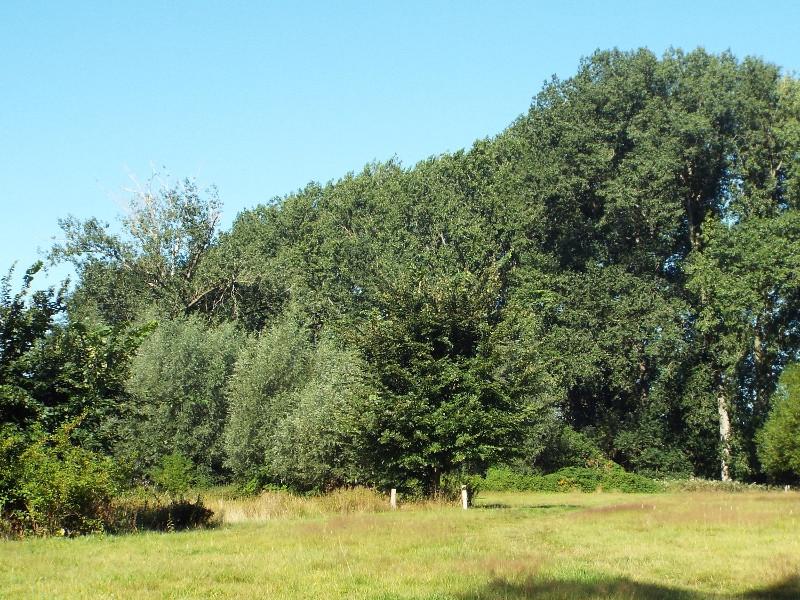 Grasland in de Mortelen