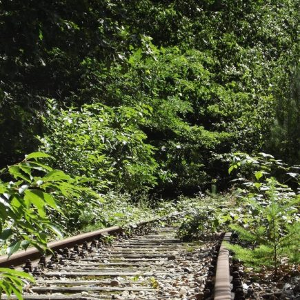 Wandelroute Rode Beek-tocht, te Herkenbosch