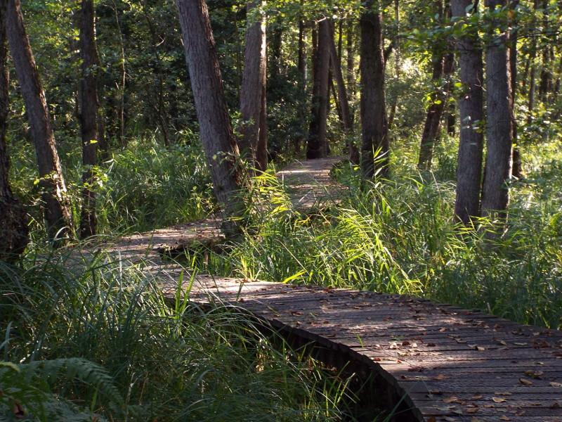 Knuppelbrugje in omgeving van de Rode Beek
