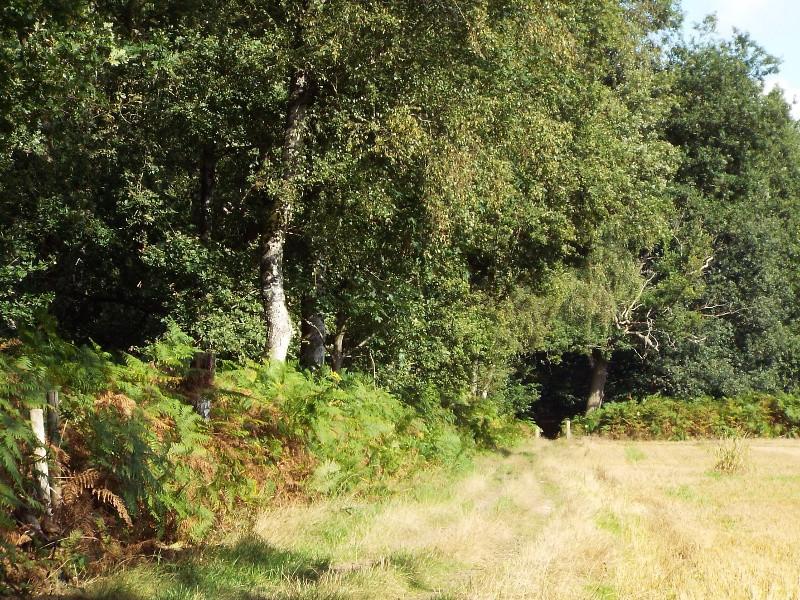 Pad langs het Heumense Bos