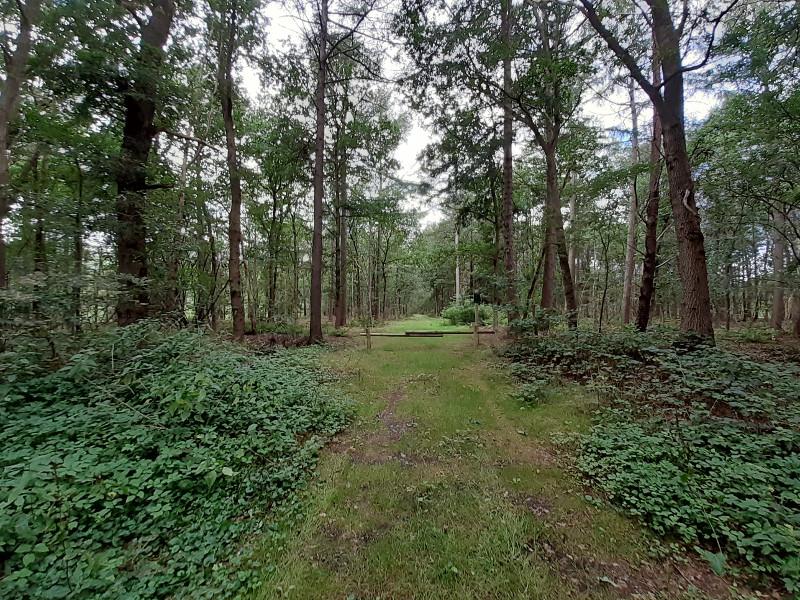 Ingang van het bos, punt 2