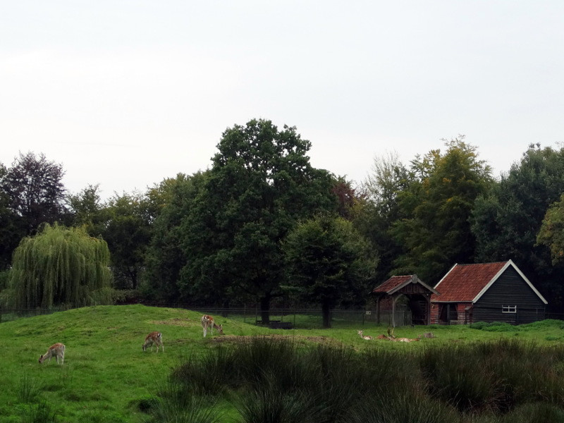 Het hertenkamp